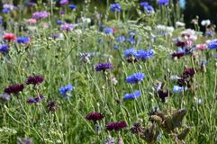 Meadow flowers stock photography