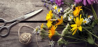 Wild flowers and scissors on old grunge wooden background chamomile lupine dandelions thyme mint bells. Wild flowers tangle of rope and scissors on old grunge royalty free stock photo