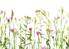 Wild Flowers Seamless Border. Herbal seamless border. Flat lay of wildflowers on white background. Floral horizontal composition Stock Photo