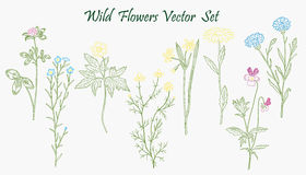 Wild Flowers set Royalty Free Stock Images