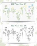 Wild Flowers set Stock Photography