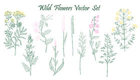 Wild Flowers set Stock Photo