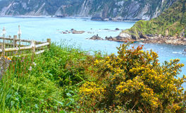 Wild flowers by shore. Stock Photos