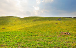 Wild flowers on slope Royalty Free Stock Images
