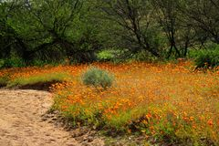 Wild flowers - South Africa Stock Photography