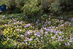 Wild Flowers in Spring Stock Photos