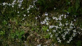 Wild flowers stock video