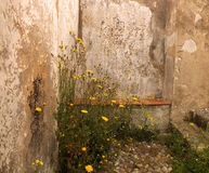 Wild flowers stone wall Royalty Free Stock Image