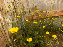Wild flowers stone wall closeup Stock Image