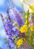 Wild flowers. Wild summer flowers on the sky background Stock Image