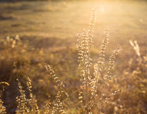 Wild flowers on sunny autumn meadow Royalty Free Stock Photography