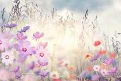 Wild flowers at sunset Stock Photo