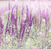 Wild flowers, tinted Royalty Free Stock Photo
