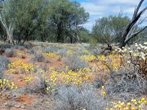 Wild flowers. And trees growing in the desert Stock Images