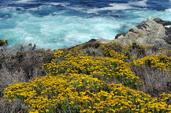 Wild flowers turquoise ocean Royalty Free Stock Image
