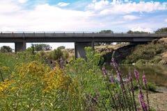 Wild flowers under bridge Stock Images