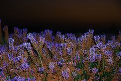 Wild flowers. Of various colors at night Stock Image