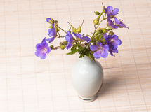 Wild flowers in a vase Royalty Free Stock Images