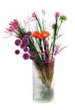 Wild flowers in vase. Composition of wild flowers in vase isolated Royalty Free Stock Image