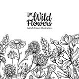 Wild flowers vector drawing set. Isolated meadow plants and leaves vector illustration