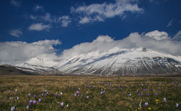 Wild flowers on Vettore mountain at National Park of Monti Sibillini Stock Photo
