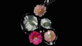 Wild flowers in the water game. Wild flowers enclosed in water balls. 3d illustration stock illustration