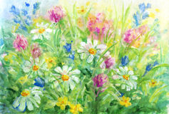 Wild flowers - watercolor background painting. Royalty Free Stock Image