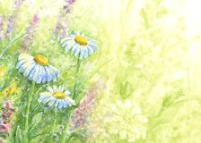 Wild flowers - watercolor background. Royalty Free Stock Image
