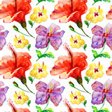 wild flowers, watercolor illustration Stock Image