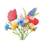 Flowers poppies watercolor pattern set illustration seamless royalty free stock images