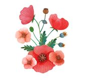 Flowers poppies watercolor pattern set illustration seamless royalty free stock photo