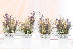 Wild flowers. For wedding or party decoration Royalty Free Stock Images