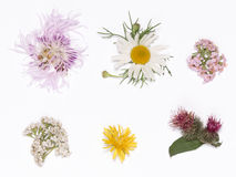 Wild flowers on a white Stock Photo