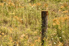 Wild Flowers and Wood Fence Post Stock Photo