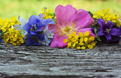 Wild flowers on wooden background Stock Images