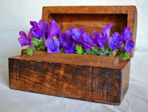Wild Flowers Wooden Box. Old wooden box containing wild purple flowers Royalty Free Stock Photo