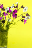 Wild flowers on a yellow background Stock Photography