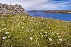 Wild flowery coastline hdr Stock Photography