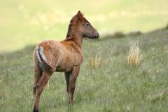 Wild Foal stock images