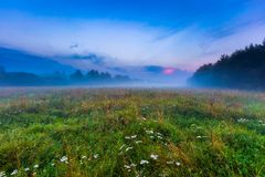 Wild foggy meadow landscape Stock Image