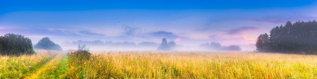 Wild foggy meadow landscape Stock Photo