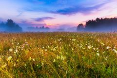 Wild foggy meadow landscape Royalty Free Stock Photo