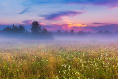 Wild foggy meadow landscape Stock Photos