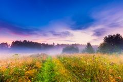 Wild foggy meadow landscape Stock Images