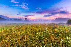 Wild foggy meadow landscape Royalty Free Stock Photography