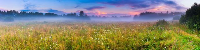 Wild foggy meadow landscape Royalty Free Stock Images
