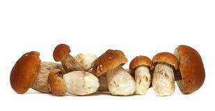 Wild Foraged Mushroom selection isolated on white background, with shadow. Boletus Edulis mushrooms Stock Image
