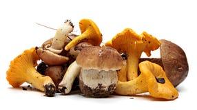 Wild Foraged Mushroom selection isolated on white Royalty Free Stock Photos
