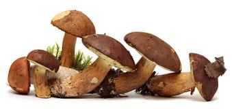 Wild Foraged Mushroom selection isolated on white Stock Photo