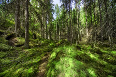 Wild forest Stock Image